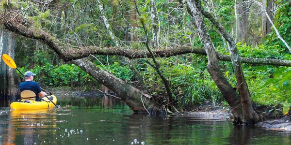 Image of man kayaking in the Loxahatchee River