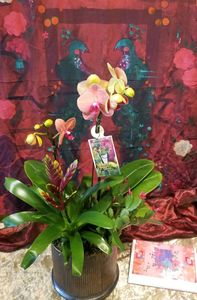 orchid garden Bainbridge Island Best Florist Flower Shop Delivery
