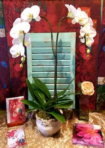 Double Orchid Bainbridge Island Best Florist Flower Shop Delivery