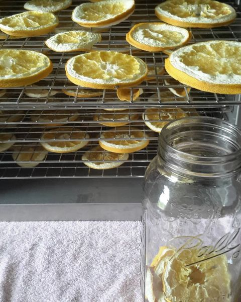Learn to dehydrate your own Citrus : teas, bath products, citrus water..more..