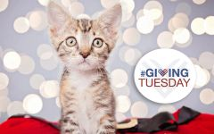 Donations - Giving Tuesday Fundraiser
