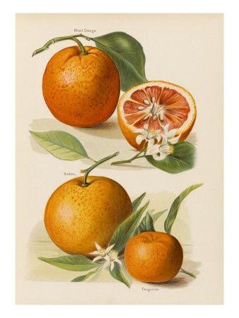 Tangerine 100% Pure Essential Oil 10ml