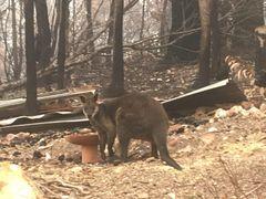 Donations ~ Eden Bushfire Relief Fund