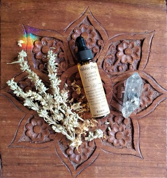 Australian White Sage ~ Organic Flower Essence ~ Mother Elixir | Vibrational Plant Medicine Alchemy ~ Own Grown Botanicals