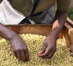 Ethiopiques Blend