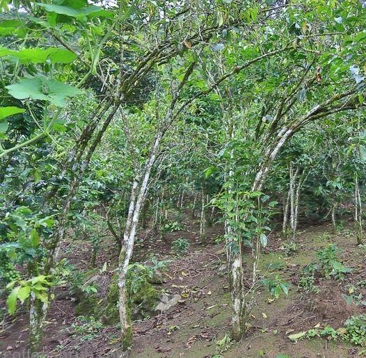 Guatemala Huehuetenango La Libertad