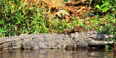 Crocodile park is wild natural park in dandeli with wild too many crocodile.