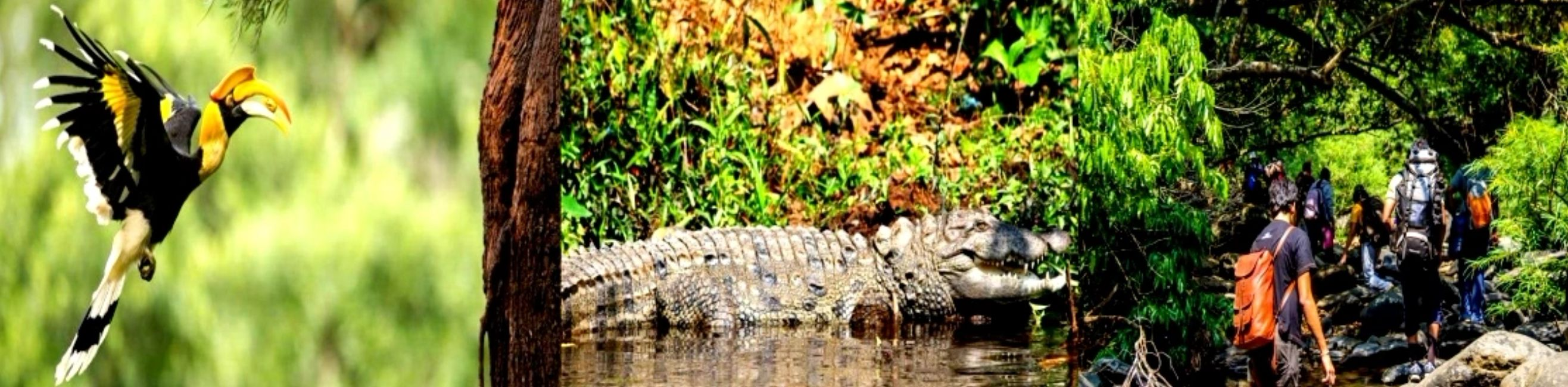 Dandeli Resorts Jungle stay. Dandeli Attraction place Syntheri Rock Water falls. Crocodile Park