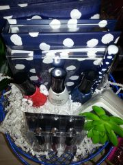 Gift Basket - Ellen Tracy Polka Dot Blue