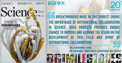 international yeast chromosome consortium study, BGI
