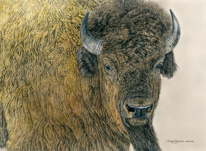 """Slow Bull"" - 22 x 16 on Canvas Limited Edition Print"