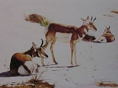 """""""First Snow"""" - 19x14 by Judith Angell Meyer"""