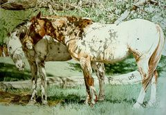 """""""Peeper's Ponies"""" - 24x18 by Judith Angell Meyer, Limited Edition Print on Paper"""