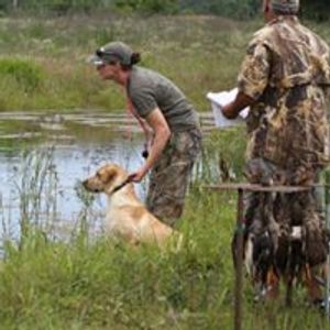 hunting dog, duck dog, bird dog, gun dog competition dogs AKC