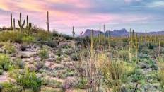 Guided Morning Desert Walk