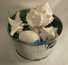 Bucket of Shells Goatsmilk Soap