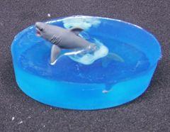 Safari Shark