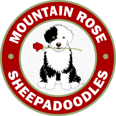 Mountian Rose Sheepadoodles