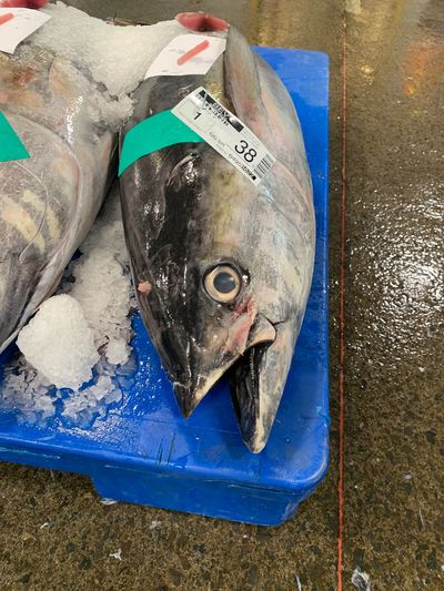 A tuna for sale at pier 36 market in Hawaii.