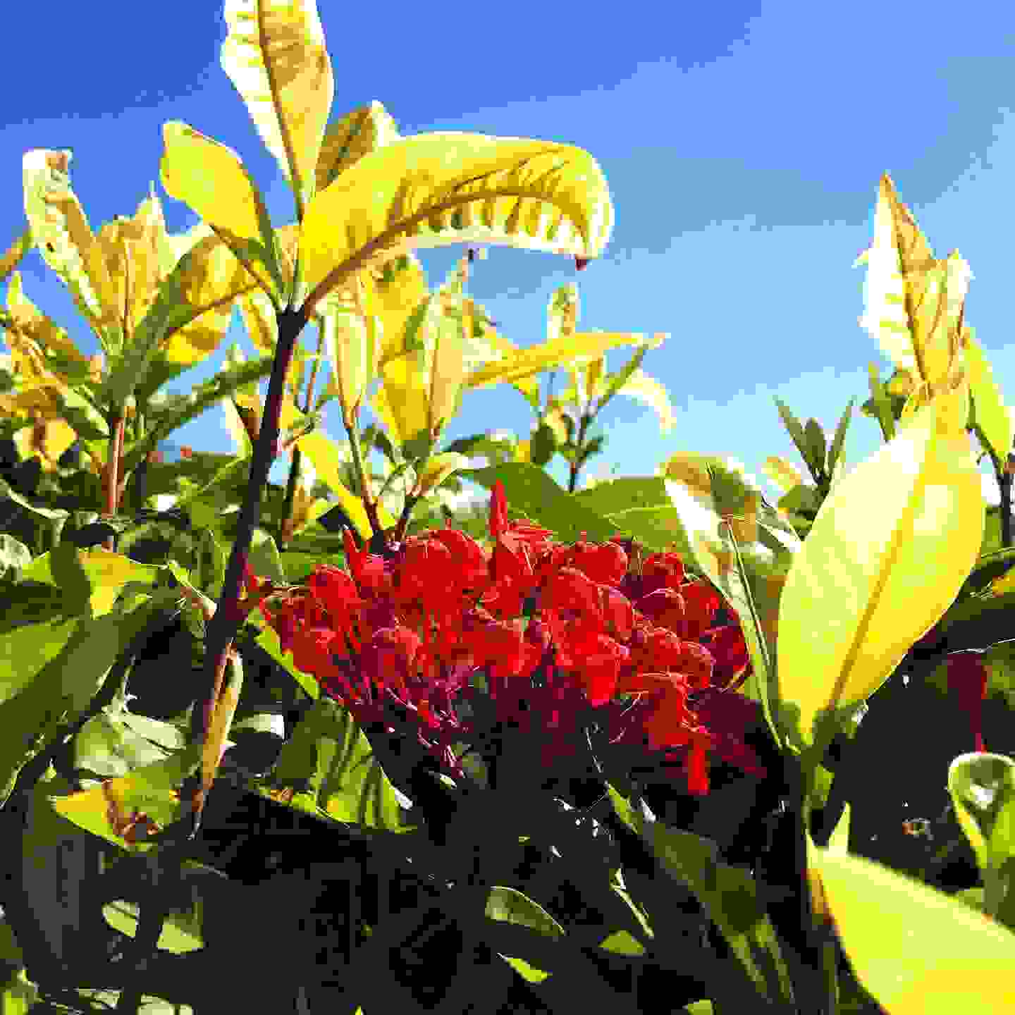 Flowers and leaves against blue sky - book now