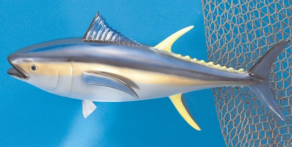 "TT303 Yellow Fin Tuna 12"" Fish Mount"