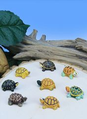 MBX100 Mini Box Turtles (12 PC SET)
