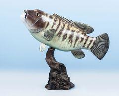 "TT231 Black Fish 19"""