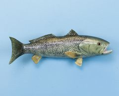 "TT332 Weakfish 14"" Fish Mount"