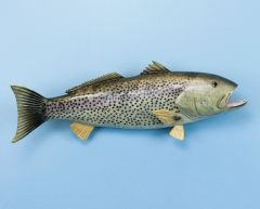 "TT432 Weakfish 20"" Fish Mount"