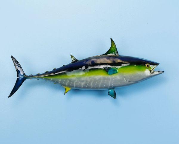 "TT619 Yellowfin Tuna 24"" Wall Mount"