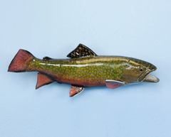 TT605 Brook Trout 16""