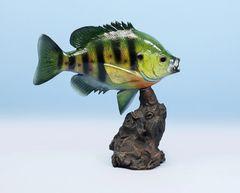 """TT109 Sunfish 12"""""""