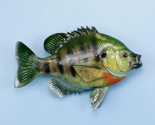 """TT309 Sunfish 12"""" Fish Mount"""