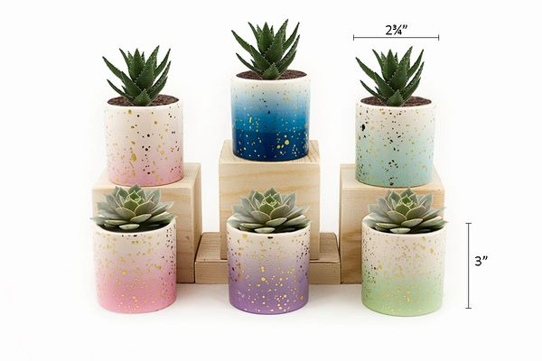 MP2 Mini Pots Set of 12 pcs