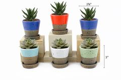 MP4 Mini Pots Set of 12 pcs