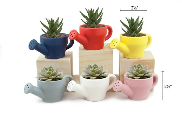 MP6 Mini Pots Set of 12 pcs