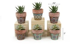 MP7 Mini Pots Set of 12 pcs