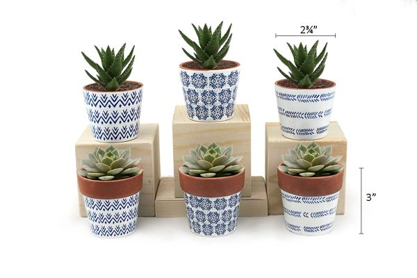 MP8 Mini Pots Set of 12 pcs