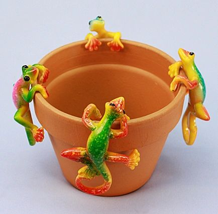 PH427 Md Gecko (12 PC SET)