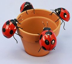 PH426 Md Lady Bug (12 PC SET)