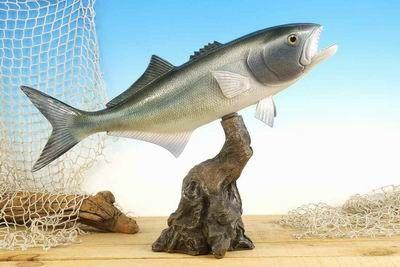 """TT129 Blue Fish 14"""""""