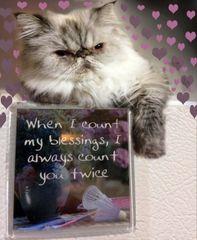 P-Kitty Valentine