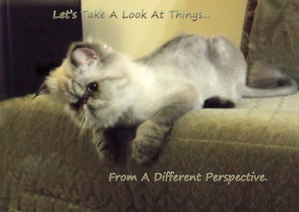 Take a Look From A Different Perspective