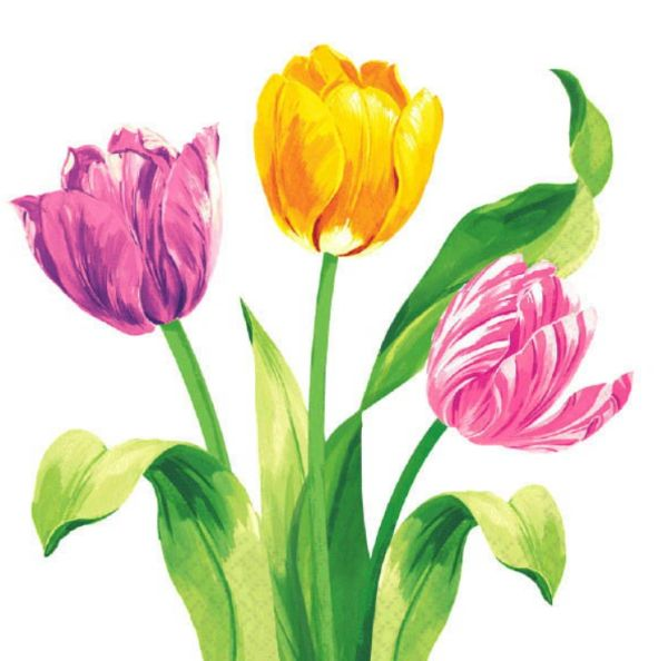 Spring Tulips Luncheon Napkins, 16ct