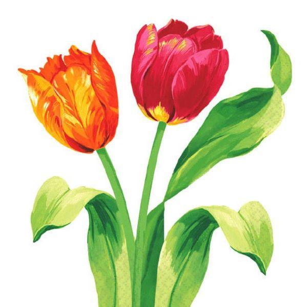 Spring Tulips Beverage Napkins, 16ct