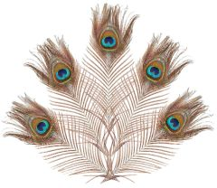 Peacock Feathers, 5ct