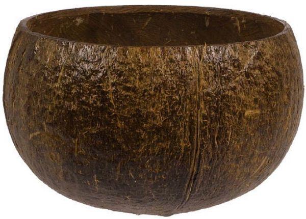Authentic Coconut Cup 18oz