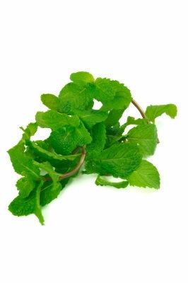 Peppermint essential oil 1/2 oz