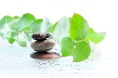 Eucalyptus essential oil 1 oz