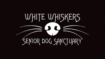 White Whiskers Senior Dog Sanctuary